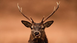 Woman shot by hunter who mistook her for deer