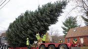 Christmas tree. Portland Press Herald/Press Herald via Getty Images