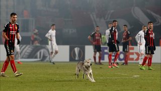 Must see: Dog interrupts tied soccer match