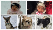 These dogs and babies all saw snow for the first time on Friday, Dec. 8, 2017.