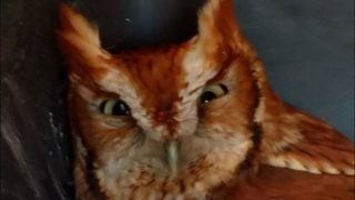 Owl turns routine oil change into real hoot
