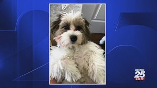 Thief breaks into home, only steals family dog