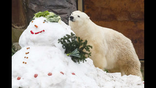 Photos: Zoo animals celebrate Christmas