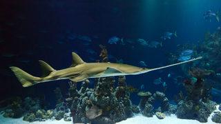 Orlando Aquarium: What to know before you go