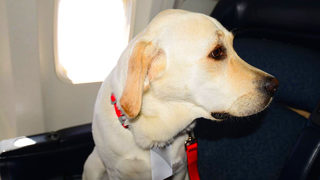 Delta passenger bitten by emotional support dog couldn