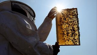 Iowa police charge 2 juveniles with destroying half-million bees