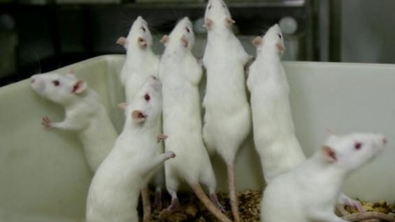 New cancer 'vaccine' completely wipes out tumors in mice -- human