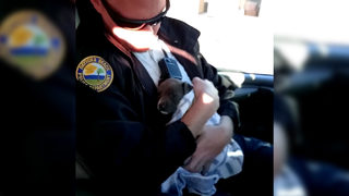 WATCH: Police officers rescue freezing puppy found under Florida bridge