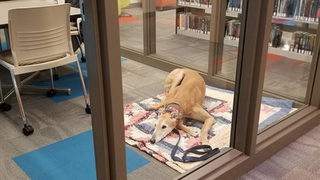 All Sting the library dog wanted was to listen to kids read, but no one showed up