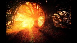 Sunlight could reduce risk of multiple sclerosis, study finds