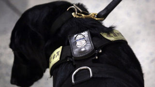 Police K-9 bites girl, 4, while chasing suspect
