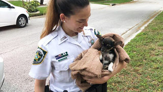 Deputies rescue puppy dubbed
