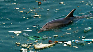 Giant Garbage Patch in Pacific 16 Times Larger Than Estimates