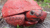 Video: Man charged with dumping paint and cement on gopher tortoise