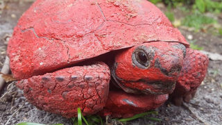 Tortoise covered with paint, concrete discovered in Florida