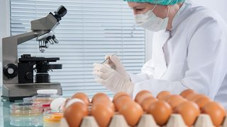 Salmonella infection from backyard poultry spreads to 227 more people in 20 more states