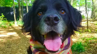 Stray dog named Publix rescued, then adopted by his guardian angel
