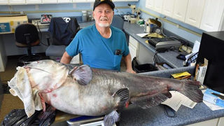 What a catch! Fisherman reels in giant 121-pound catfish