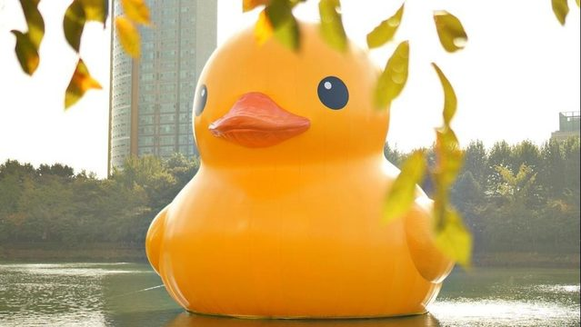 File Image Of An Inflatable Duck. Photo: Pixabay
