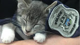 Pawfficer Donut was sworn in Firday to the Troy Police Department. (Photo: Troy Police Department)