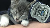 """""""Pawfficer"""" Sworn in by Michigan Police Department"""