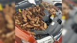 Gabe Awrey issued a warning about checking cars for squirrel surprises like an engine compartment full of pinecones.