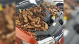 Man Issues Warning For Cars About Nutty Squirrels
