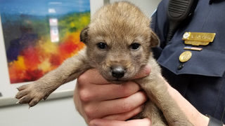 Adorable puppy brought into police station wasn