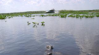 Top Orlando wildlife tours
