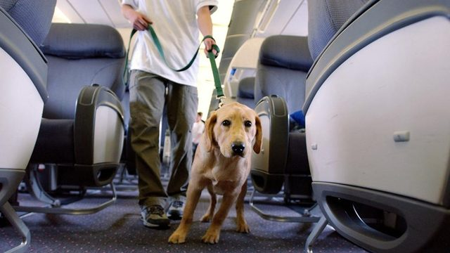 JetBlue Changes Policy On Emotional Support Animals
