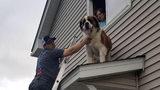 Firemen Rescue Saint Bernard From Roof