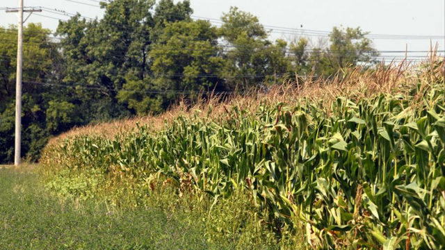 Missing Girl 3 Found In Missouri Cornfield With Dog At Side