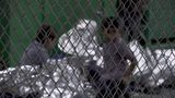 Watch Video from Inside the Border Protection's Processing Detention Center in Texas