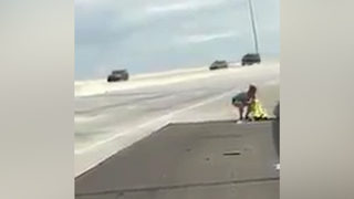 Video: Florida family saves kitten from interstate