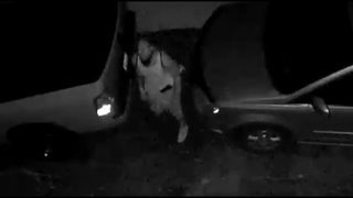 Thief fails three-point-turn, flees after he can