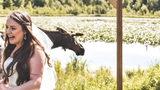 A moose crashed a wedding in Alaska.