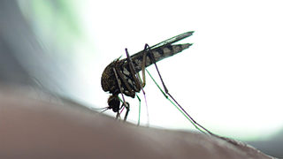 1/3 of the mosquito traps in DeKalb County have tested positive for West Nile virus