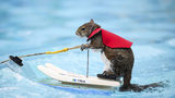 Twiggy, the water-skiing squirrel, is the 7th in a line of Twiggies going back to the late 1970s. It is on a farewell tour due to the retirement of its owner, Lou Ann Best.