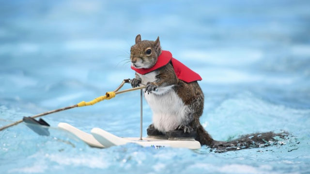Twiggy the water-skiing squirrel retires act after nearly ...