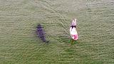 Shark Caught Lurking Near Unsuspecting Paddleboarder