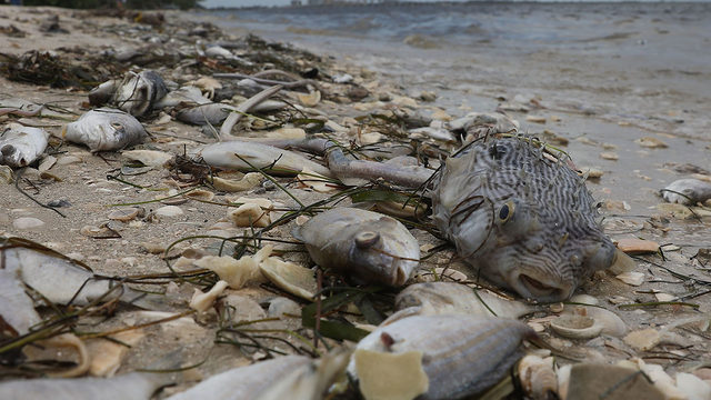 Dead sea turtles, fish and manatees washing up on ...
