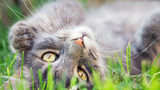 What You Need to Know About Cats