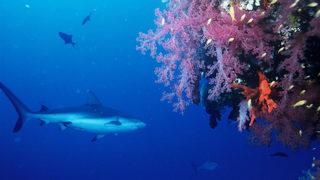 What kind of sharks are at SEA LIFE Orlando Aquarium?