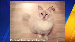 Reward climbs to $20,000 to track down serial cat killer in Washington
