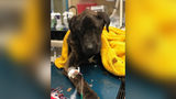 Woman Reportedly Stops Feeding Ex-Boyfriend's Dog, Leaves It To Die