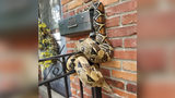 Postal Worker Discovers Large Boa on Mailbox
