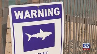 Massachusetts beach closed to swimming indefinitely after shark activity
