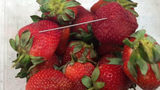 Needle In Strawberry Injures Man; Growers Say They Suspect Sabotage