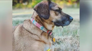 Couple desperate to find dog after Jeep with dog inside stolen from hospital