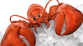 Some Lobsters Are Getting